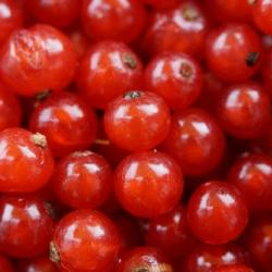 Fotó: currants-berries-fruit-red-53419.jpeg